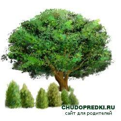 Англійські вірші про дерева. Poems about trees