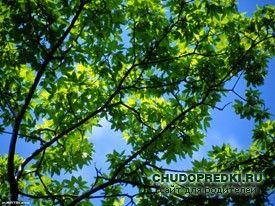 Англійські вірші про літо. Poems about summer