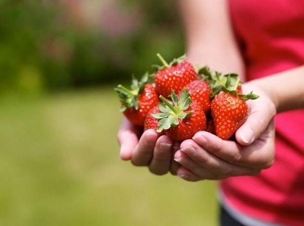 Ось що приховує приваблива ягода! Ти більше не купиш таку, побачивши це під мікроскопом